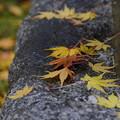 秋の落し物 III