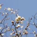 春の訪れVII