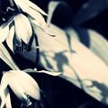 Photos: silent II