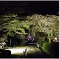 今宵の桜 ?