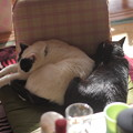 写真: 猫団子もどき