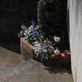 写真: 階段の踊り場花壇