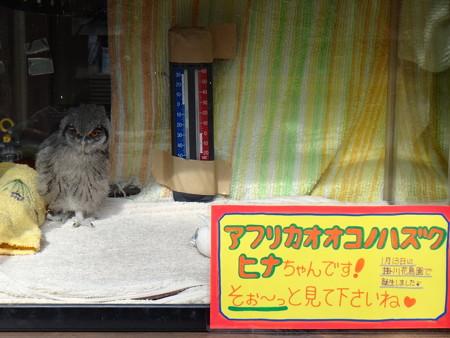 13 富士花鳥園  (4)