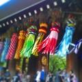 写真: 笹の葉サ~ラサラ♪