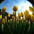 春、待ちきれず☆