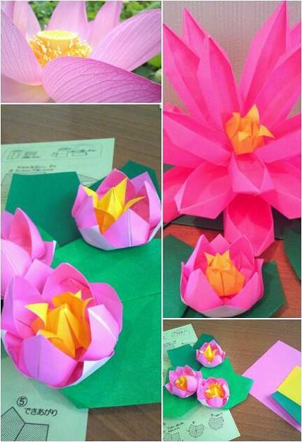ハート 折り紙 折り紙 蓮の花 折り方 : photozou.jp