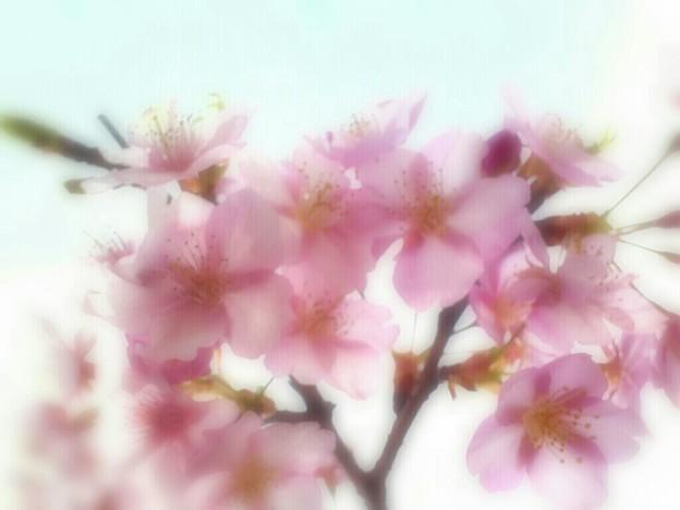 春色ピンク ♪