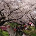 Photos: 小江戸川越、春まつり