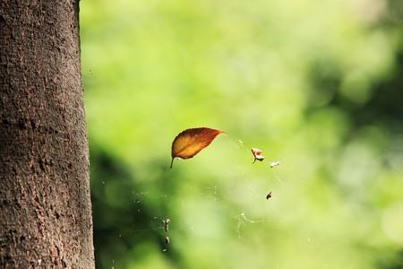 2012.08.23 大和 泉の森 蜘蛛の巣