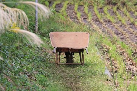 2012.10.09 追分市民の森 田圃に猫車