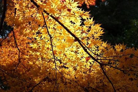 2012.12.01 大池公園 紅葉 黄葉