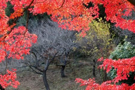 2012.12.01 大池公園 紅葉