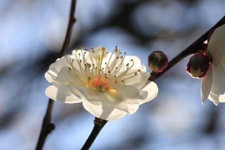 2013.02.20 和泉川 ウメ 妖艶