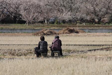 2013.03.02 曽我別所梅林 畦道