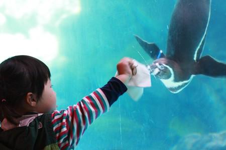 2013.03.22 ズーラシア フンボルトペンギン