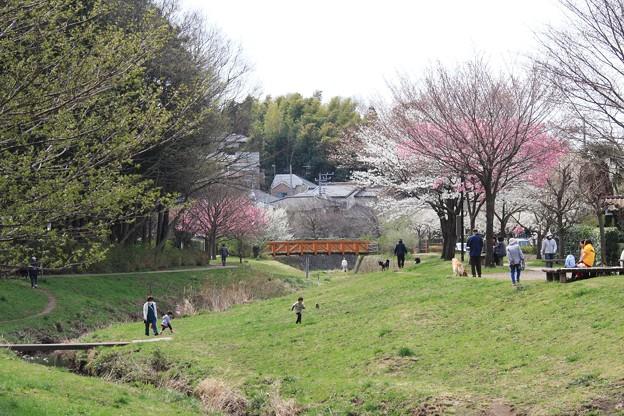 2013.03.23 和泉川 桜咲く散歩道
