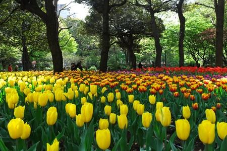 2013.04.09 横浜公園 チューリップ ベビーカー
