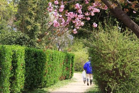 2013.04.14 和泉川 日曜日の散歩道