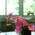写真: 2013.05.12 山手 ブラフ18番館 テーブル