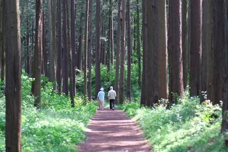 2013.05.13 追分市民の森