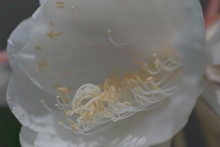2013.07.10 大船植物園 満月美人