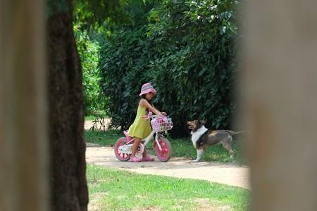 2013.08.13 和泉川 少女とライオン