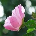 2013.09.24 和泉川 フヨウ