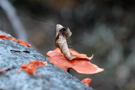 2013.11.20 追分市民の森 ヒイロタケに枯葉 ザイル