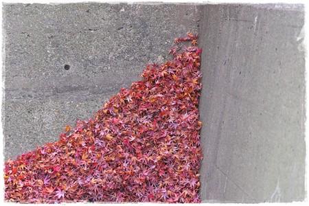 2013.12.08 和泉川 北風