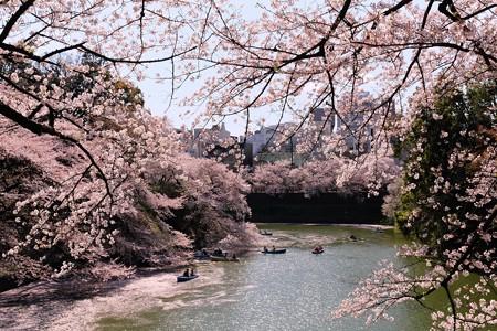 2014.04.04 皇居 千鳥ケ淵 桜道