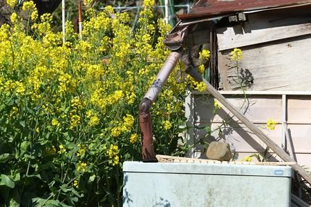 2014.04.07 和泉川 お爺さんの畑の水溜