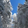 2013/1/27 八ヶ岳登山 ようこそ私たちの森へ