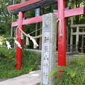 写真: 新屋山神社 本宮 鳥居