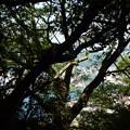 Photos: 熊野古道 地蔵峰寺から藤白側 ?