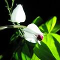 輝度花から猫パンチ