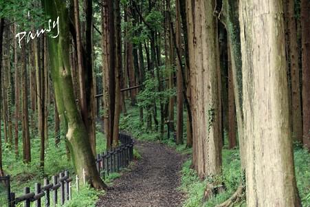 三保市民の森 027