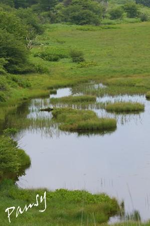 八島湿原・・18