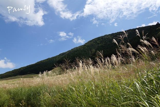 仙石原すすき草原・・10