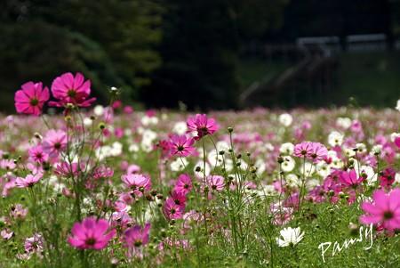 久里浜 花のくに 091