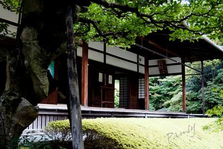 真如の庭より・・妙心寺 桂春院 10