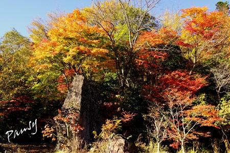 箱根の紅葉 081