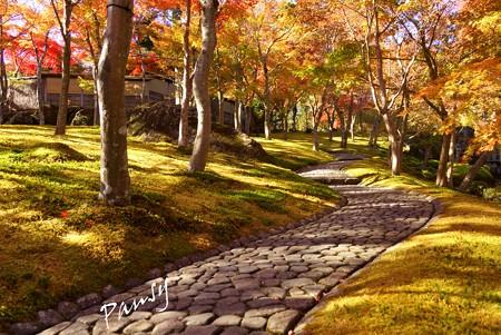 箱根の紅葉 112