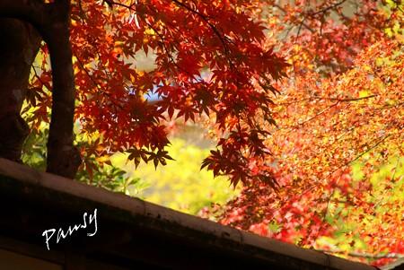 箱根の紅葉 123