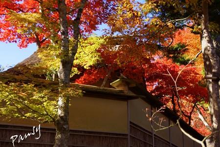 箱根の紅葉 130