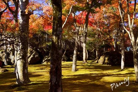 箱根の紅葉 140