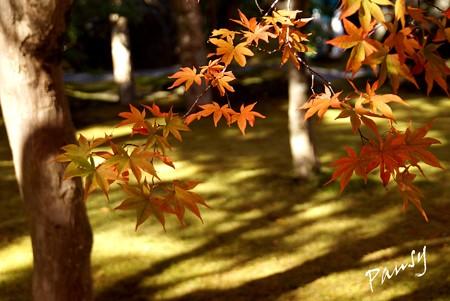 箱根の紅葉 148