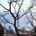 写真: 吾妻山公園 003