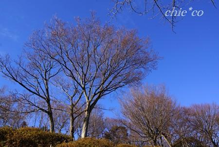 冬の樹々・・