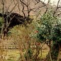 写真: 庵の彩・・