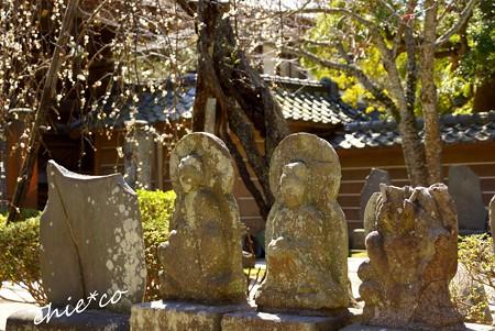 弥生の円覚寺..16